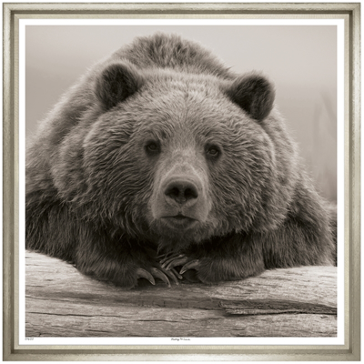 portrait-of-a-bear-front1