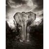 elephants-in-heaven-book-inside2