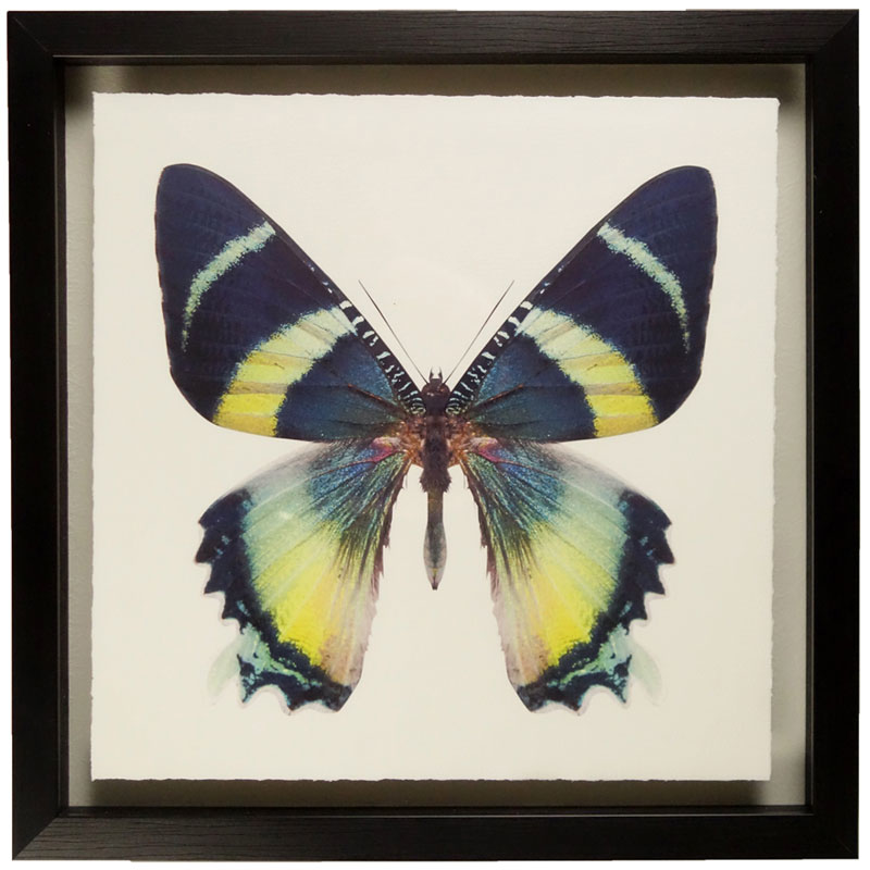 butterfly-a-front1