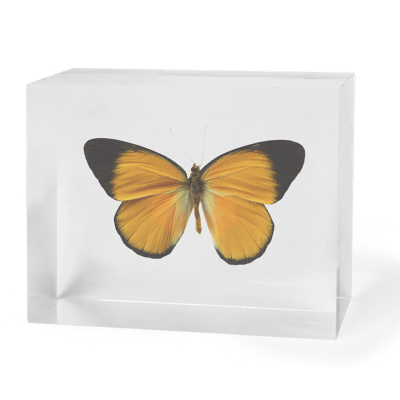 yellow-butterfly-in-acrylic-34-1
