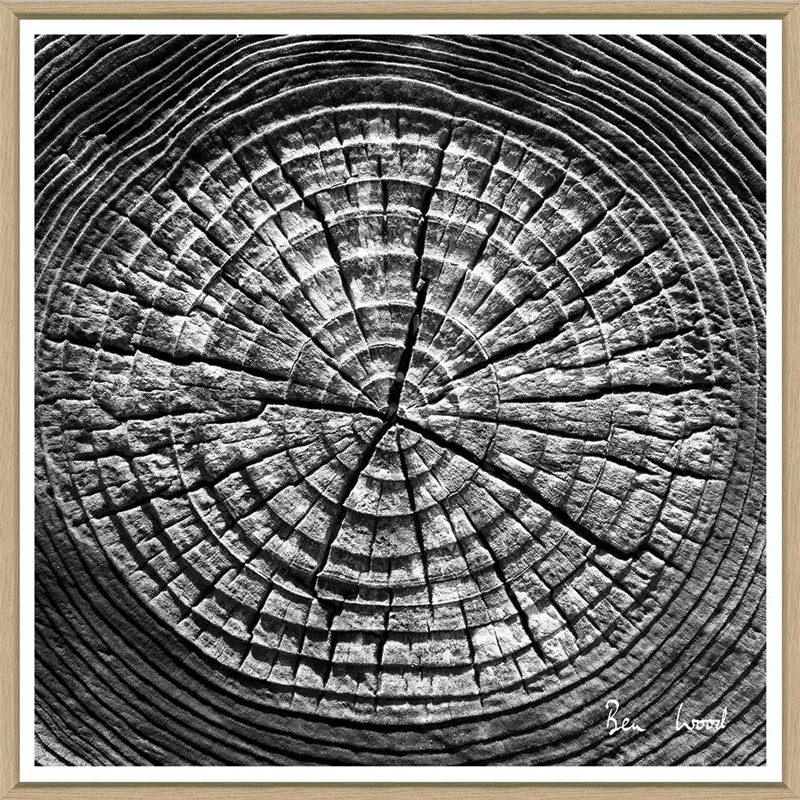tree-slices-2-front1