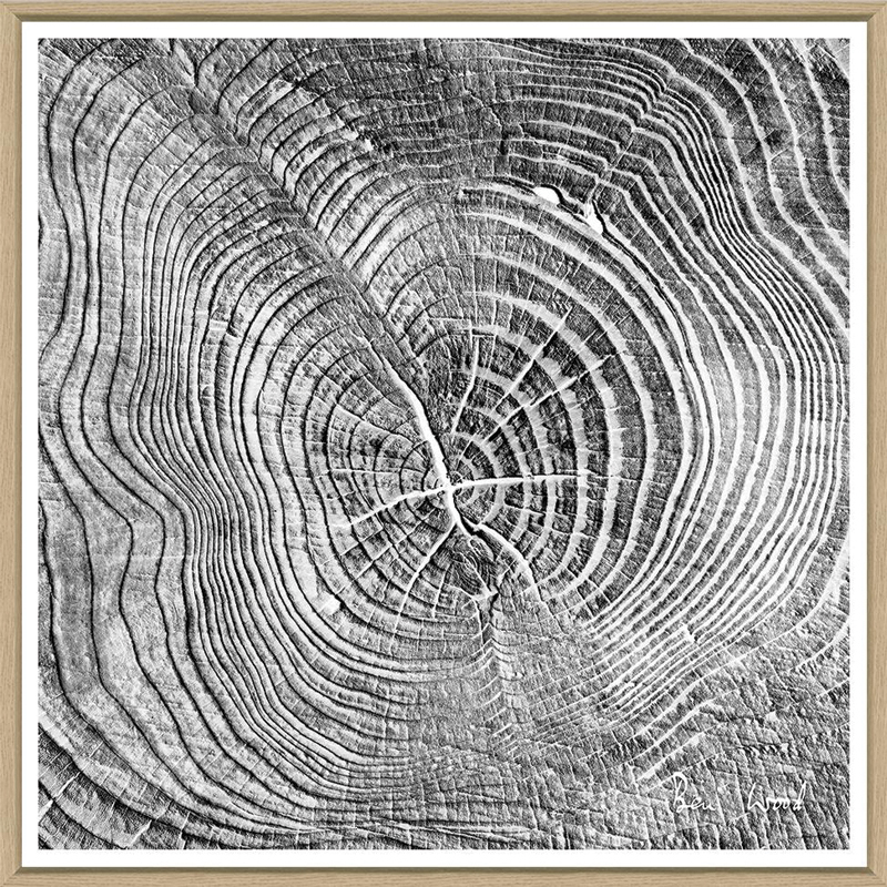 tree-slices-4-front1